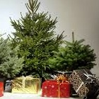 , Ziemassvētku eglīte