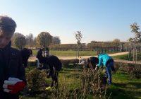 9.ab klases labo darbu nedēļas darbs Rundāles pils parkā