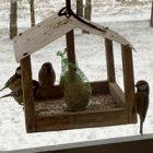 , Putnu barotavas